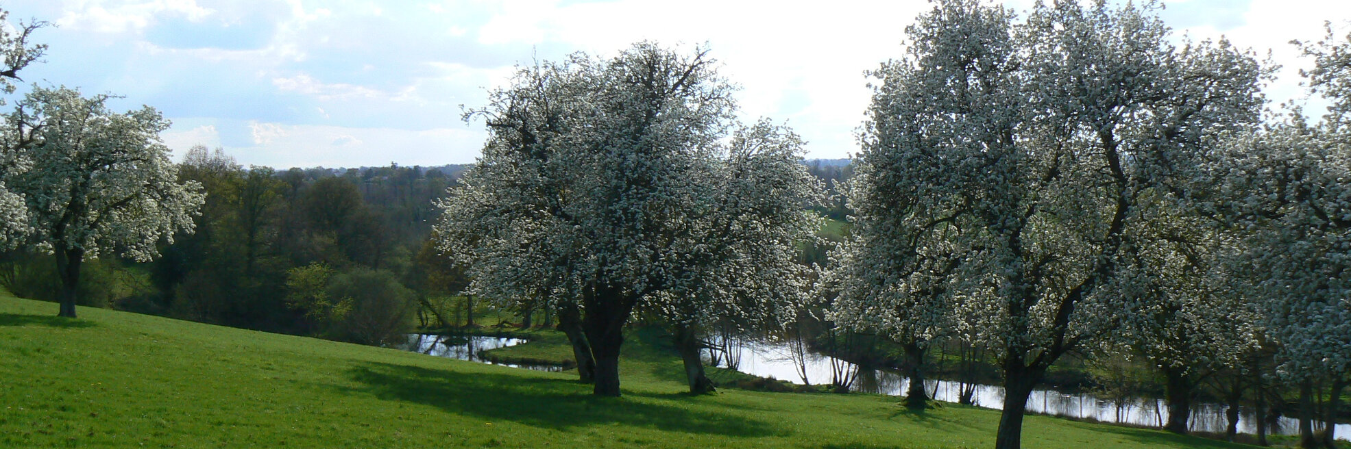 photo of a large grassy area leading down to a river surrounded by trees in blossom